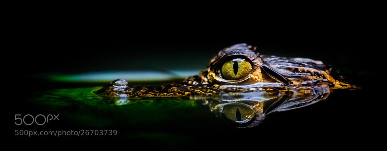 Photograph Eye by Kenny  Alevxey on 500px