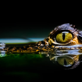 Eye by Kenny  Alevxey on 500px.com