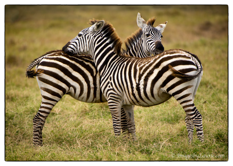 Photograph I'll Scratch Your Back, You Scratch Mine by Laurie Rubin on 500px