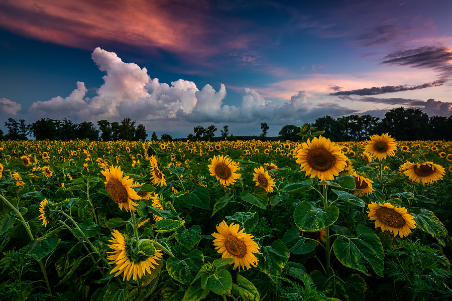 Smell of thunderstorm by Anton Petrus on 500px.com