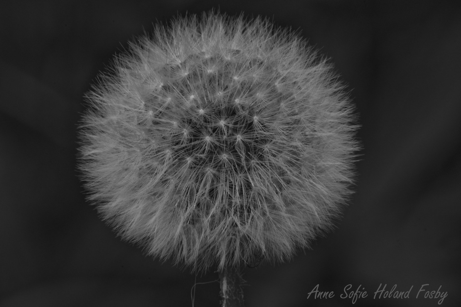 Photograph Untitled by Anne Sofie Fosby on 500px