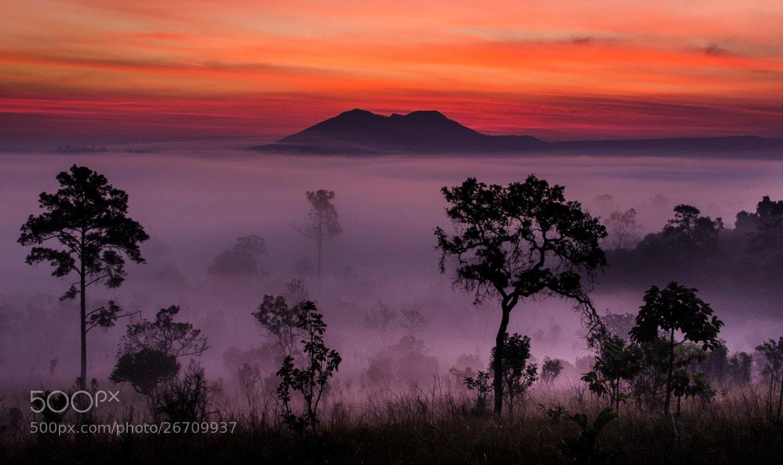 Photograph Sunrise at Tung Salang Luang by Nae Chantaravisoot on 500px