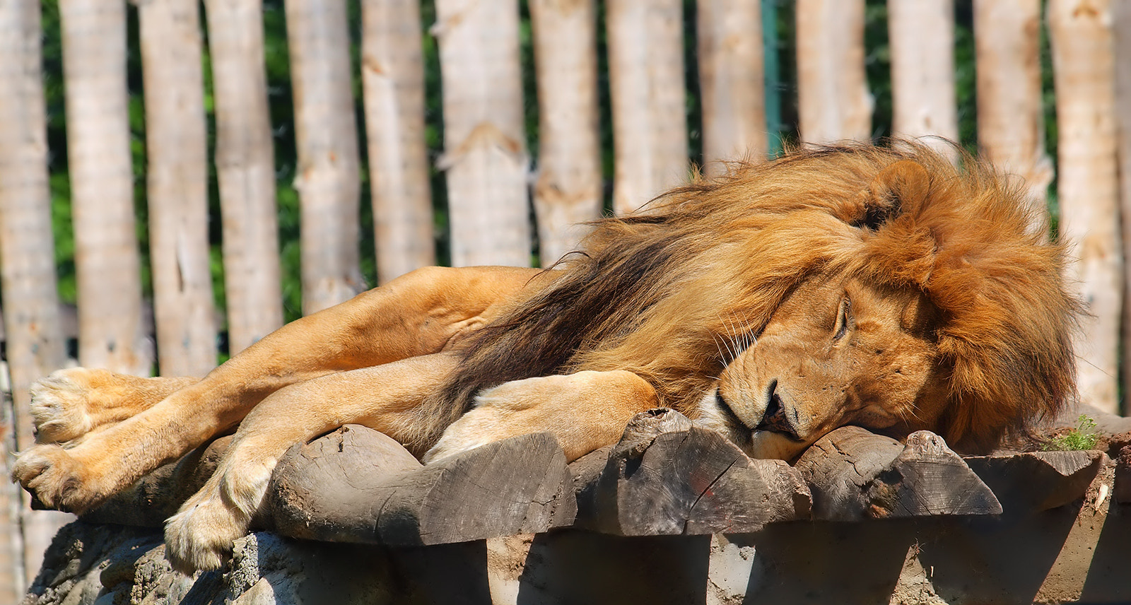 Photograph DON'T TOUCH THE SLEEPING LION by Mirna Vidić on 500px