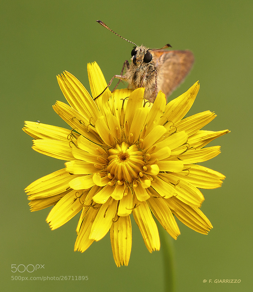Photograph Skipper by Fabio Giarrizzo on 500px