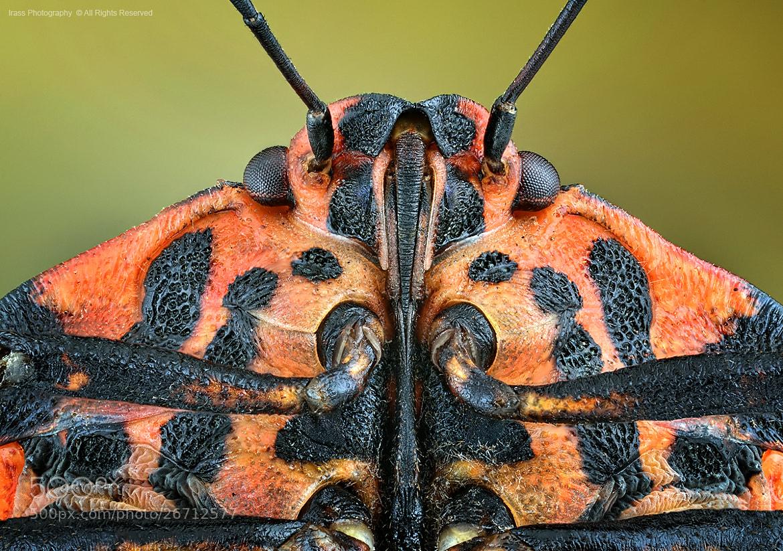 Photograph Graphosoma lineatum. by ireneusz irass walędzik on 500px