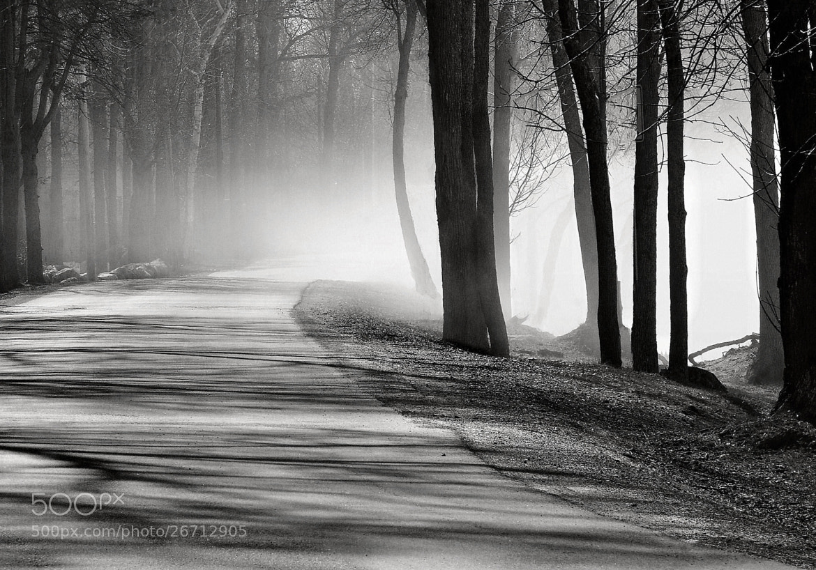 Photograph Morning Walk by SYMPL IMAGES on 500px
