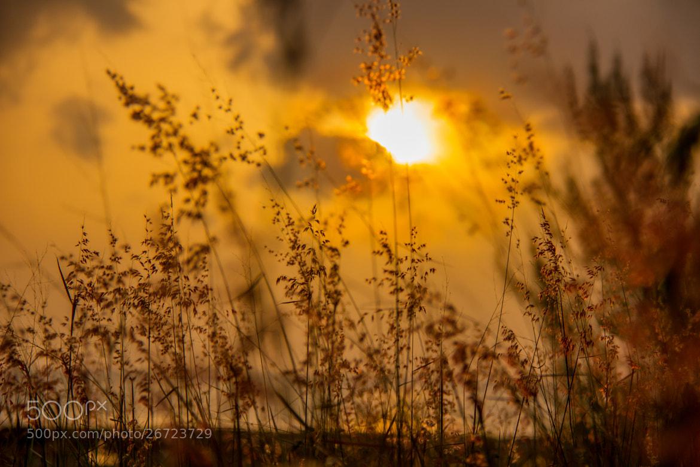 Photograph Grass  by Guntomi Wibowo on 500px