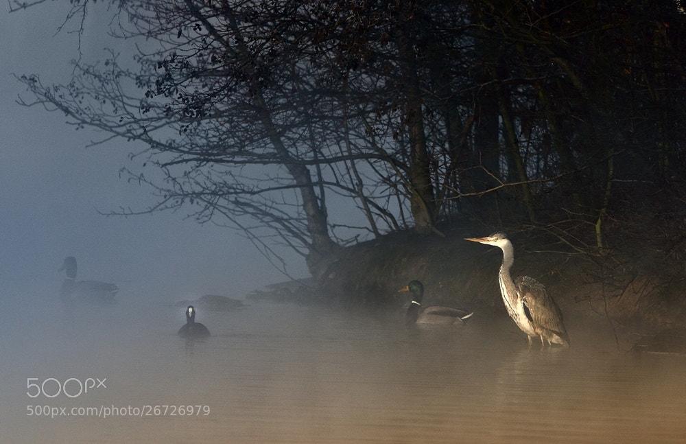 Photograph cold morning in Januar 2012 by Barbara Jurdzinski on 500px