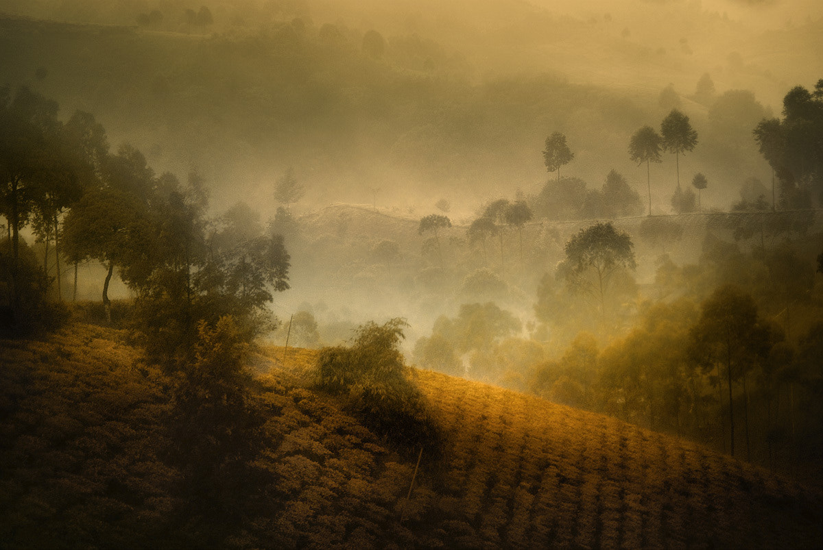 Photograph When nature speaks by Saelanwangsa  on 500px