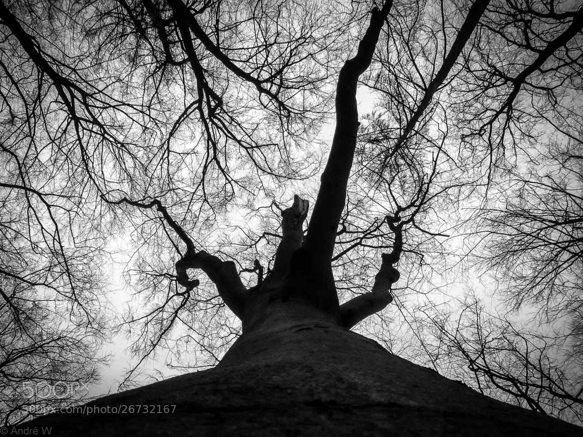 Photograph A Tree by Andre W on 500px