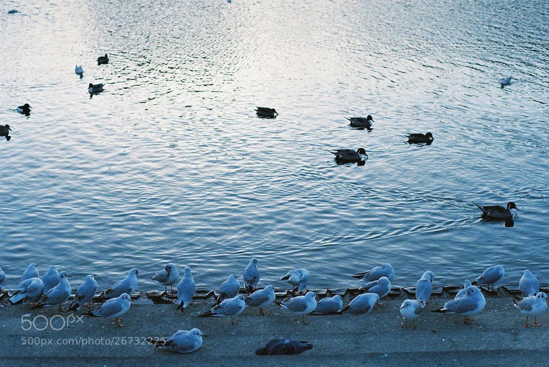Photograph riverside by Sayaka Suzuki on 500px