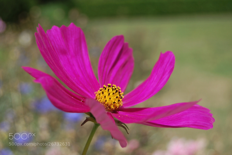 Photograph Flor. by Naaxii Photos. on 500px