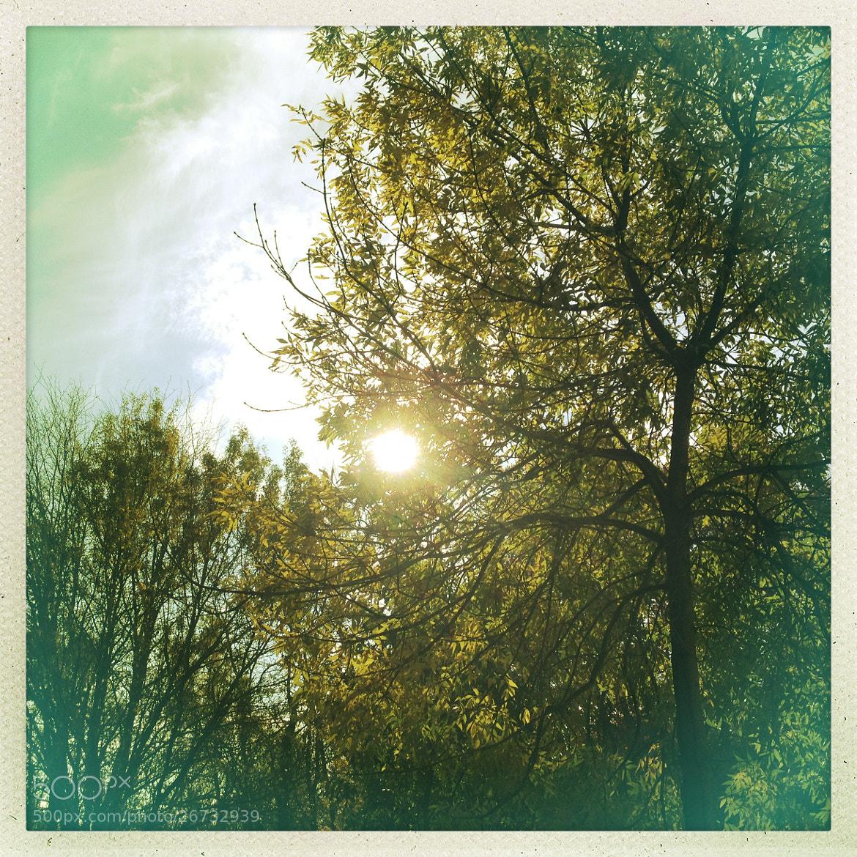 Photograph Tree&Sun by Naaxii Photos. on 500px