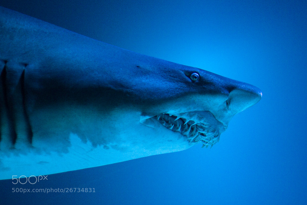 Photograph Sea life by Jens  on 500px