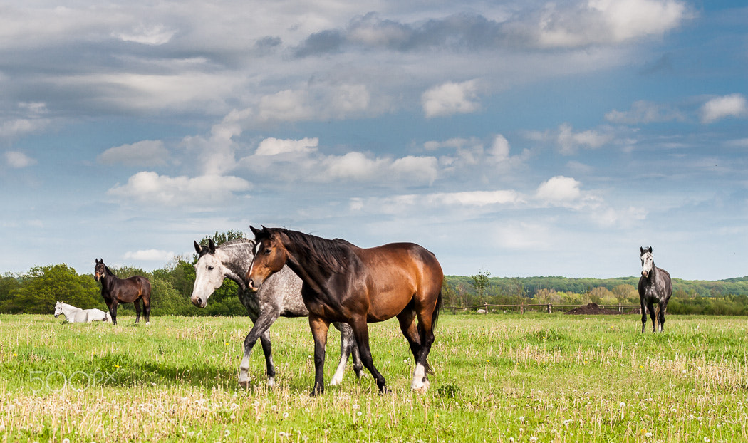 Photograph Horsing around by Jens  on 500px