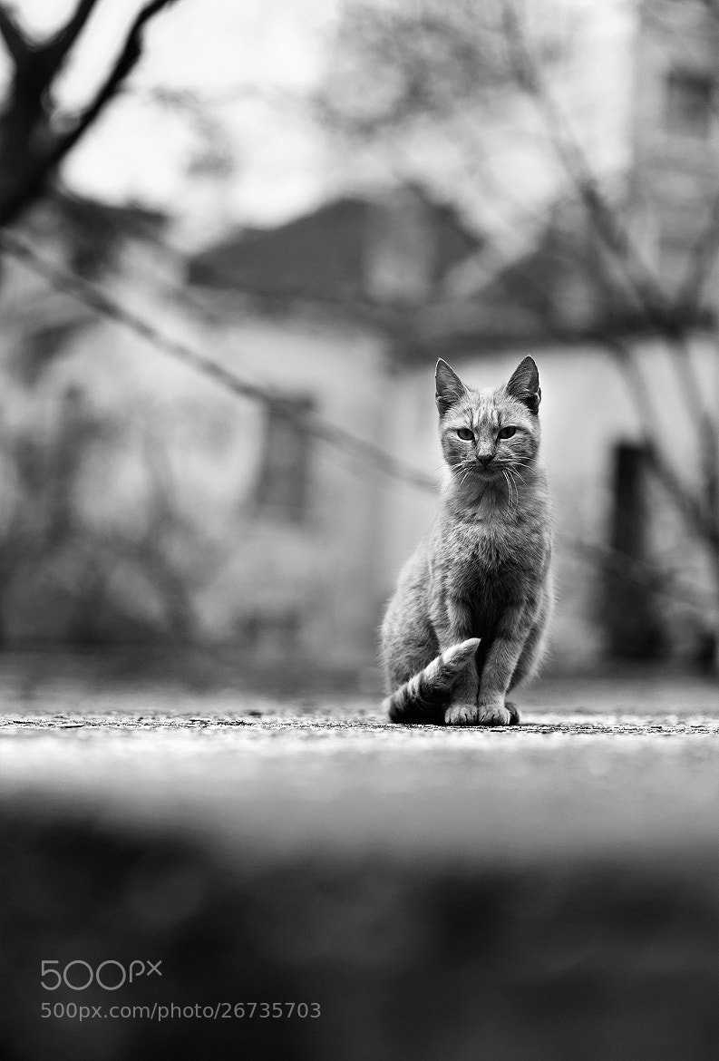Photograph street cat by Hristo Dushev on 500px