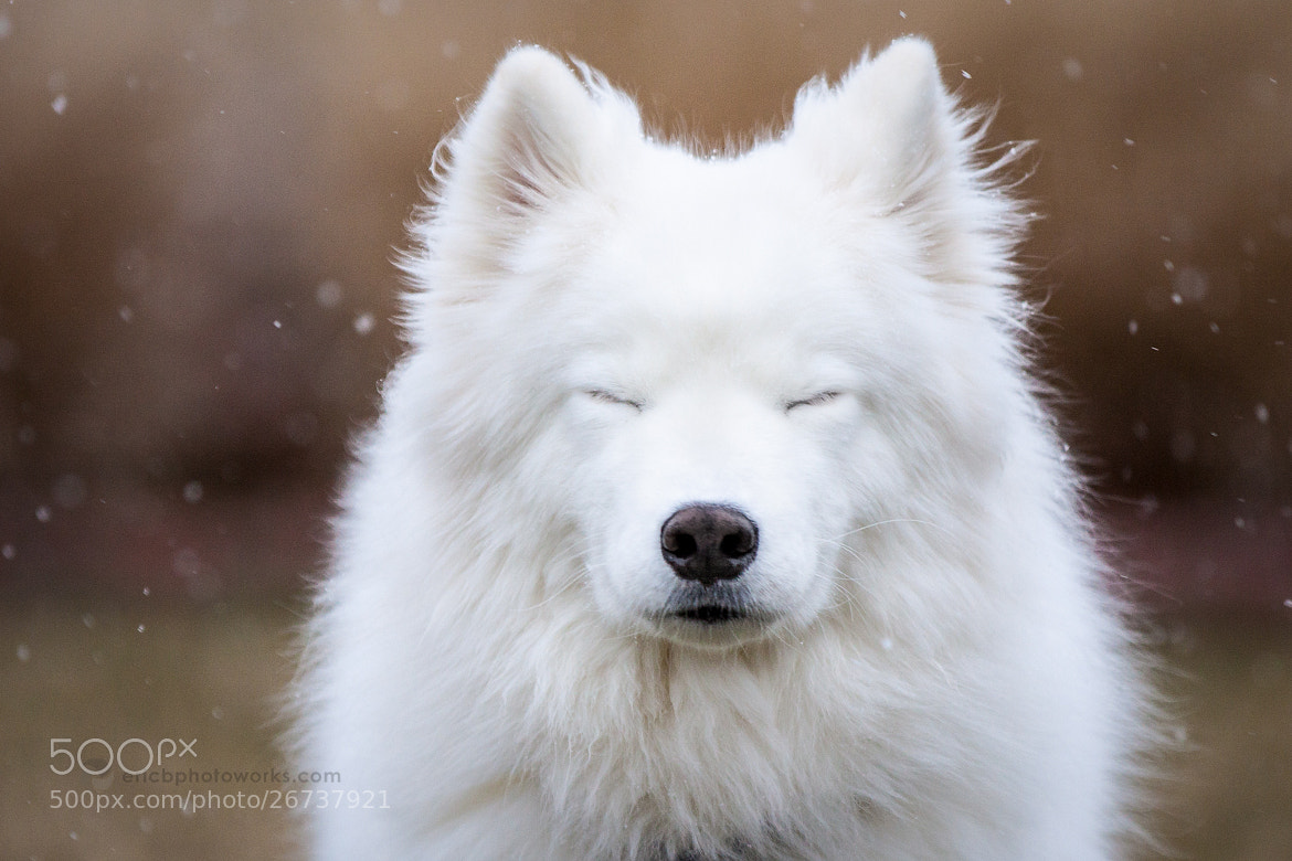 Photograph Leika Meditating In The Snow by ericbphotoworks on 500px