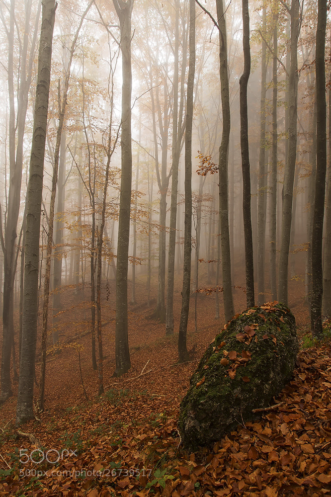Photograph autumn by Michael Schwarzmüller on 500px