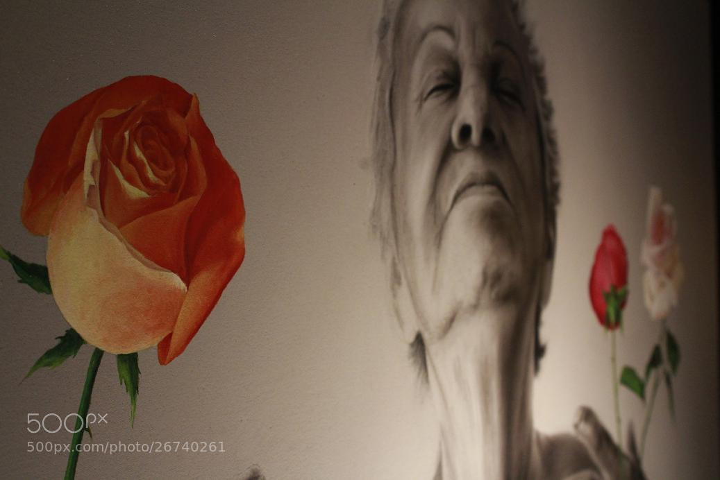 Photograph Old Roses by Rodrigo Capulleto on 500px