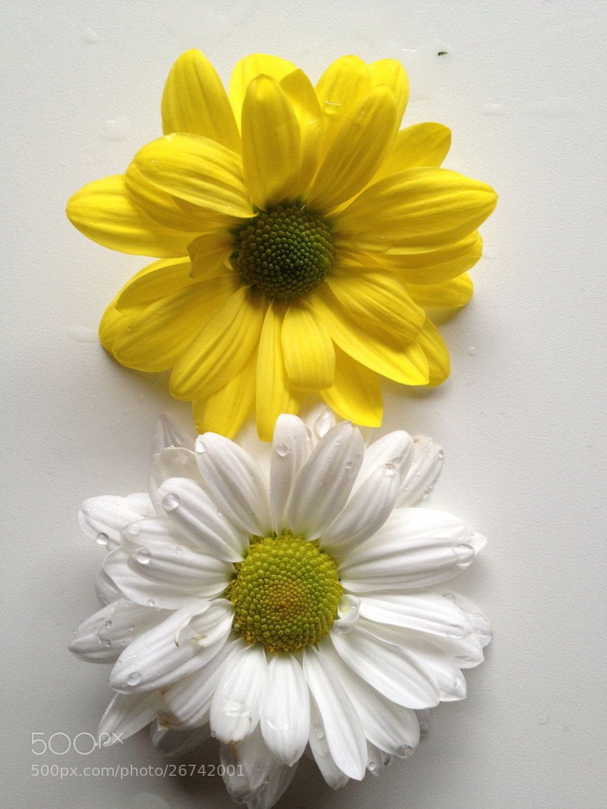 Photograph Yelow&White by Naaxii Photos. on 500px