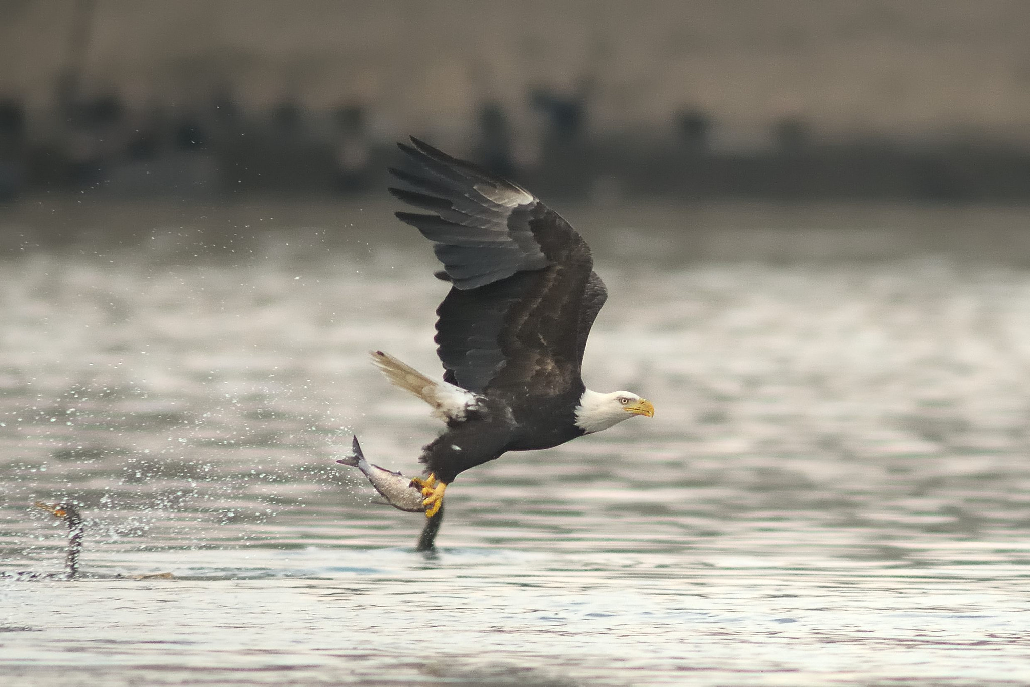 Photograph Two Talon Catch by Mark Schwall on 500px