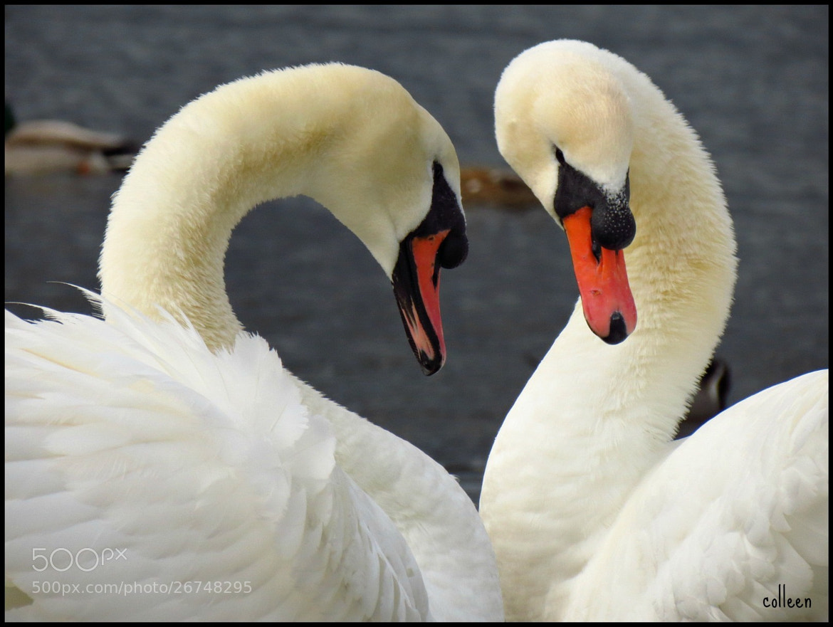 Photograph Love Was In The Air! by colleen thurgood on 500px