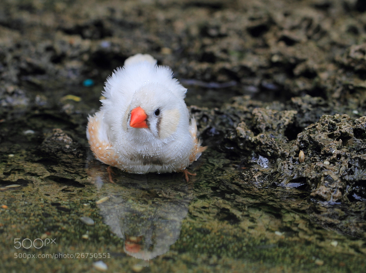Photograph Bathing by Eva Lechner on 500px