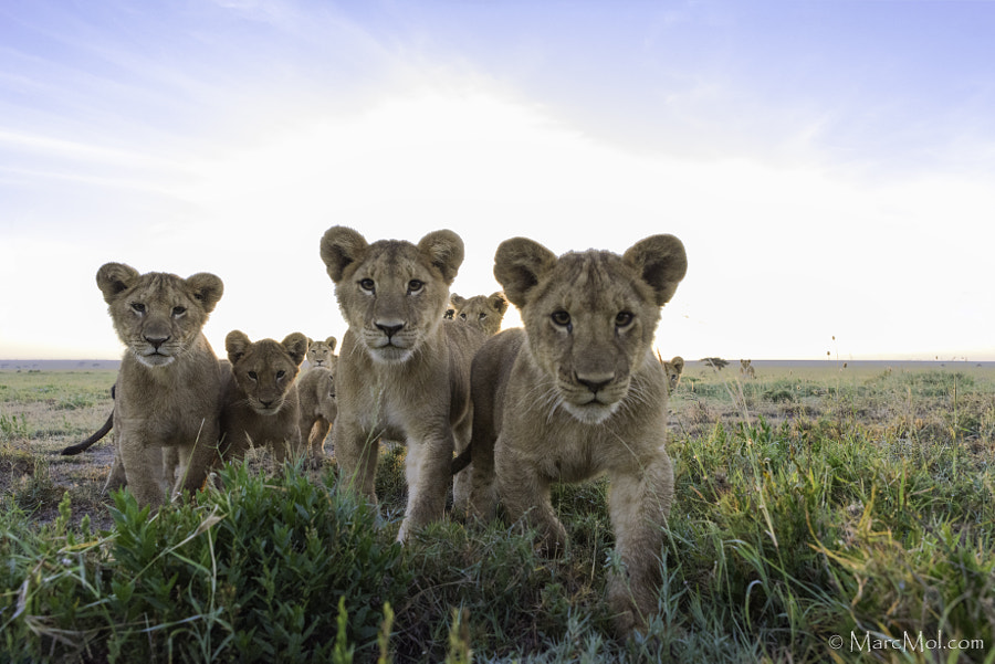Come closer by Marc MOL on 500px.com