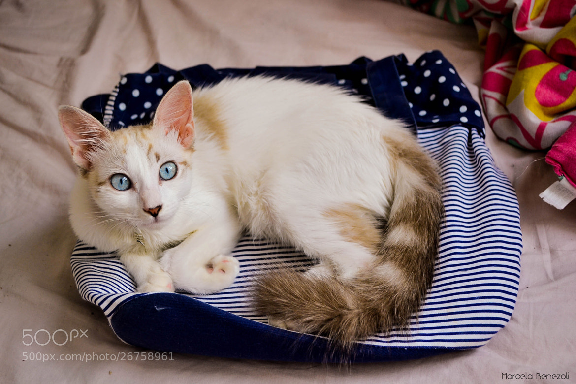 Photograph Bag bed. by Marcela Benezoli on 500px
