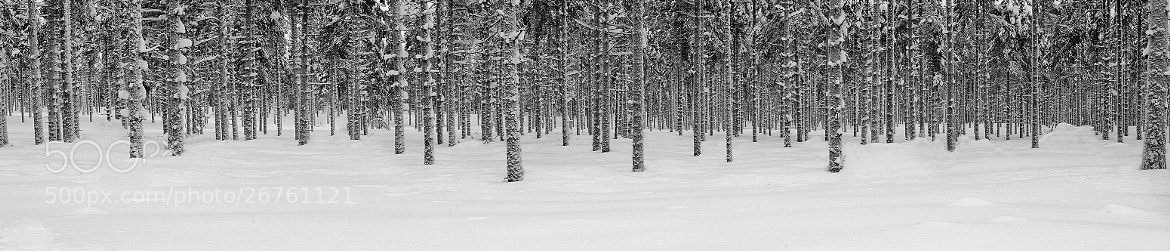 Photograph Trees in Finland by Daniel Hannabuss on 500px