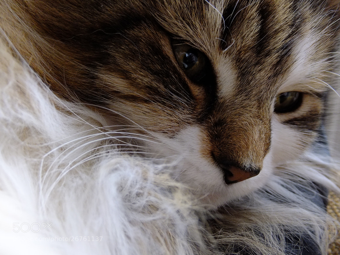 Photograph Mitzy by Lisa Devonport on 500px