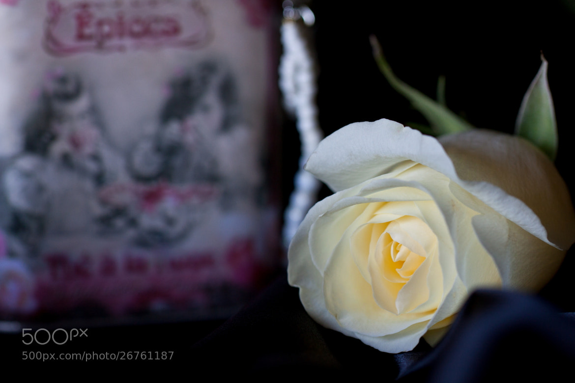 Photograph The Rose by Miza Monteiro on 500px