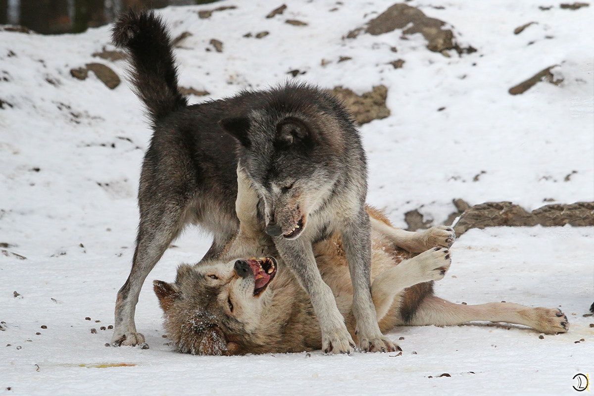 Photograph FIGHT by Daniel Lang on 500px