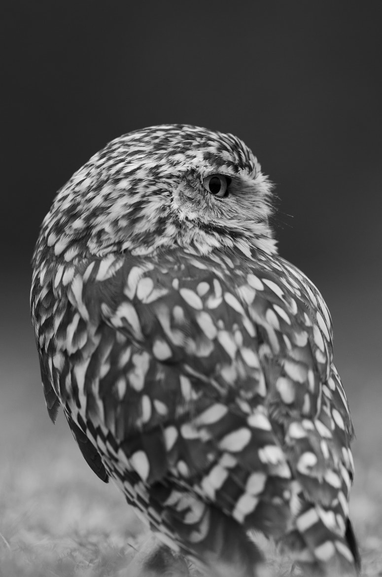 Photograph Burrowing Owl by Molly Michelin on 500px