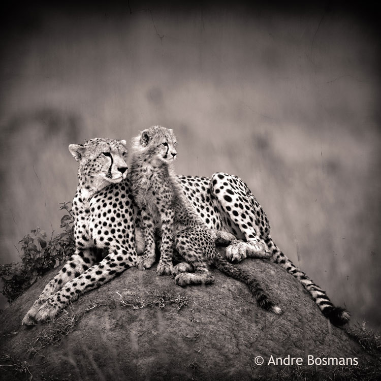Photograph Saba and her cub by Andre Bosmans on 500px