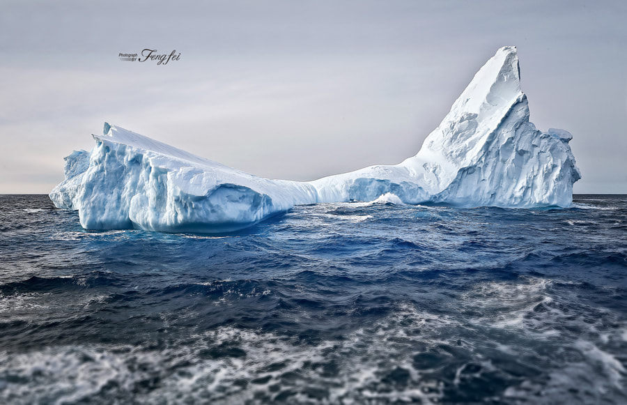 Drifting bow tie in Antarctica., автор — Rose Lee на 500px.com