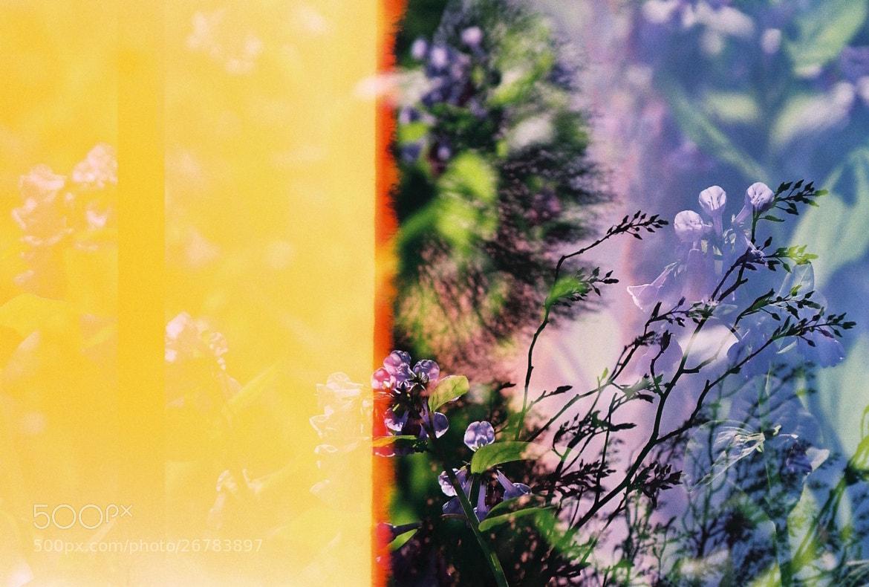 Photograph summery dewbells by vivekjena on 500px