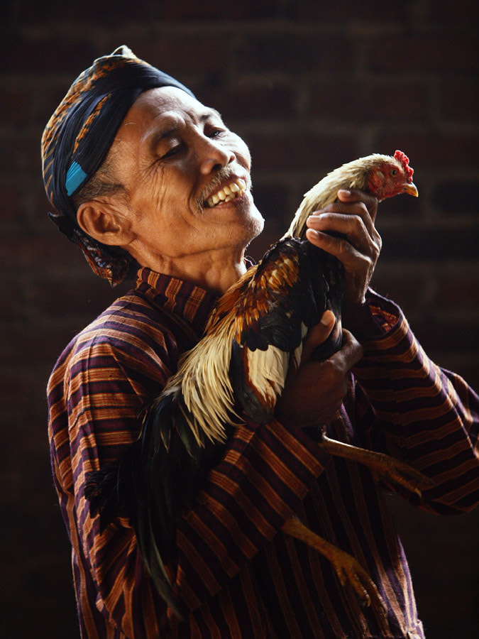 Photograph Pleasure with  rooster by Kunto Antariksa on 500px