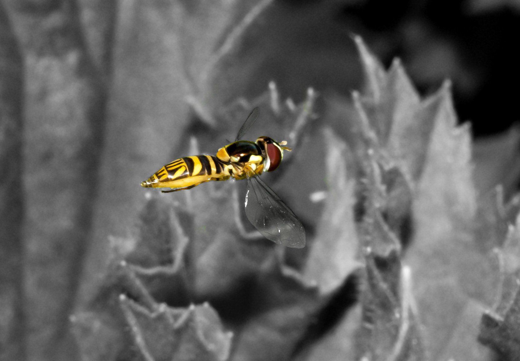 Photograph Hovering bee by Shay Johnson on 500px