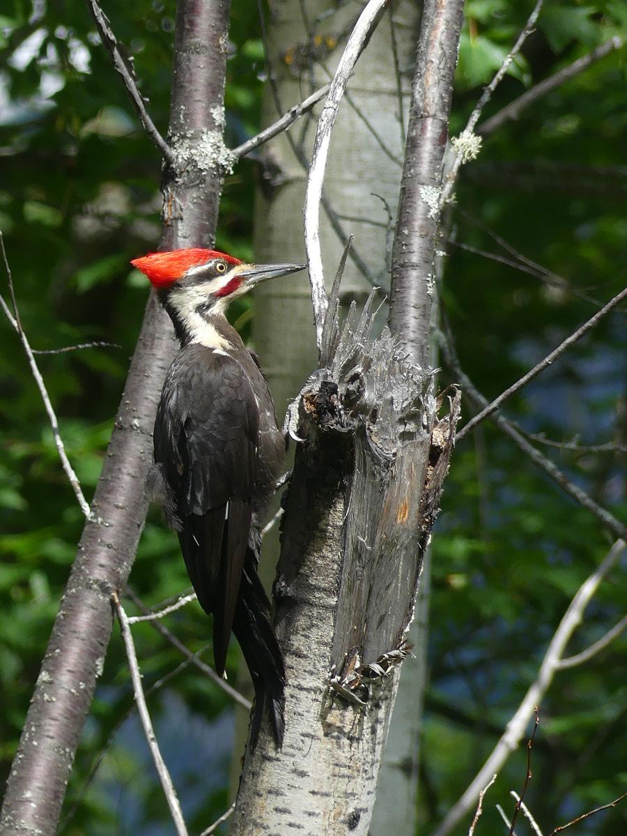 Woody Woodpecker punk V2?webp=true&sig=80954443c6128dcd429c8a76e9b06e902b208862409a165b0d6e33e72af50c21