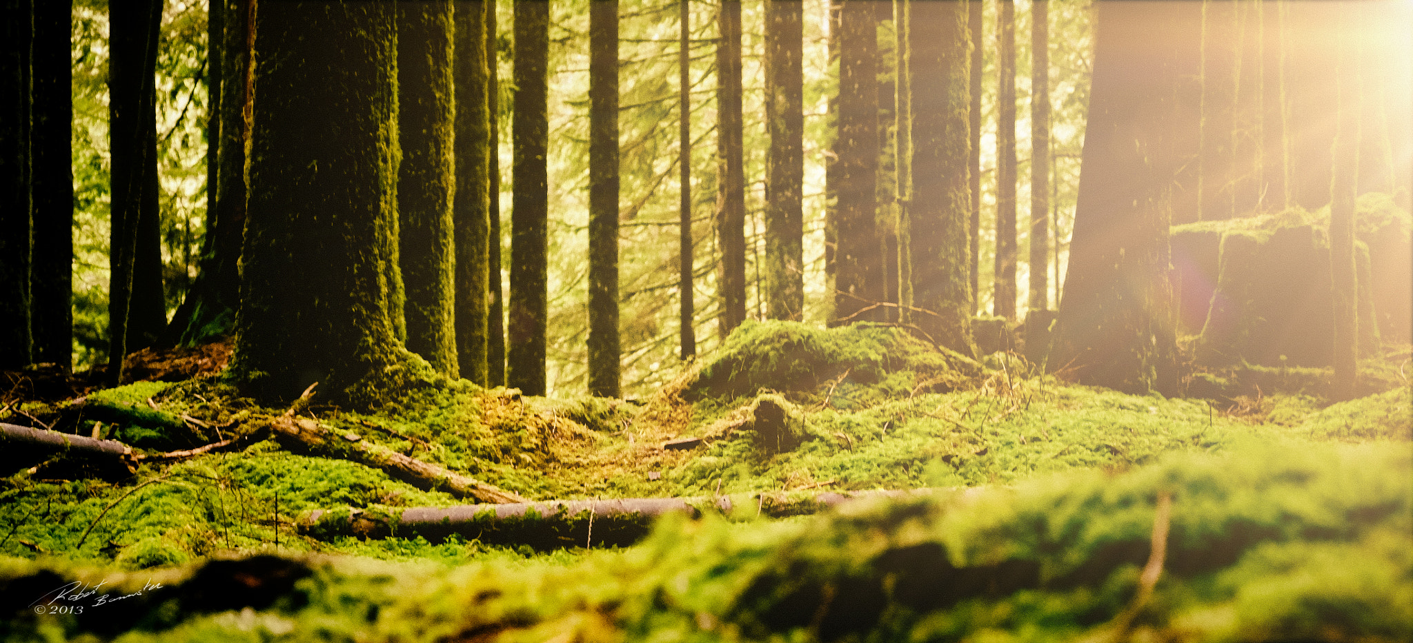Photograph Mossy by Rob Bannister on 500px