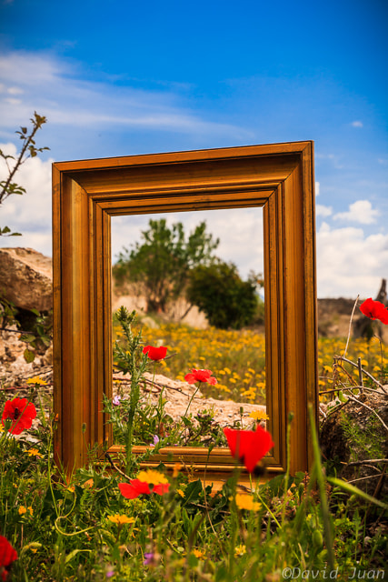 Photograph Nature framed by David Juan on 500px