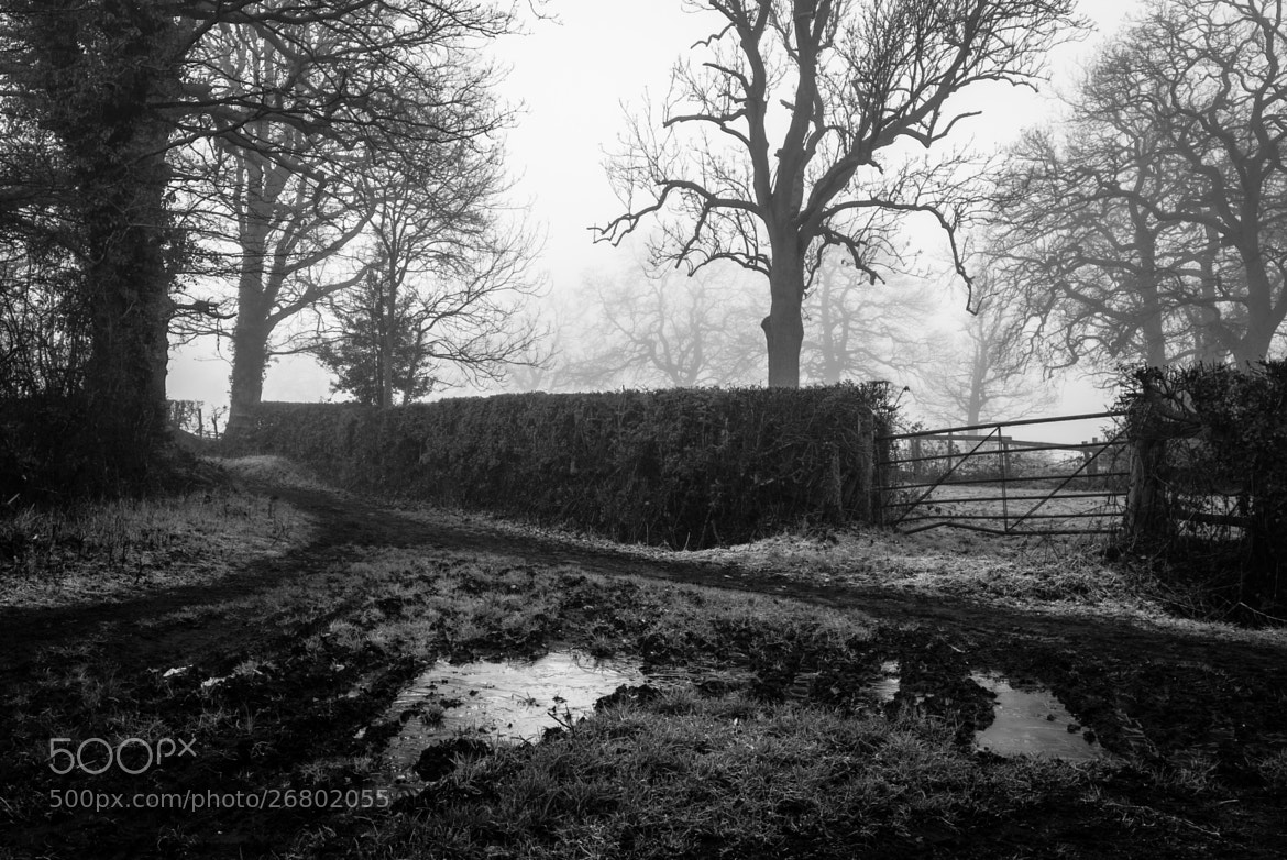 Photograph Damp by Dave Gregory on 500px