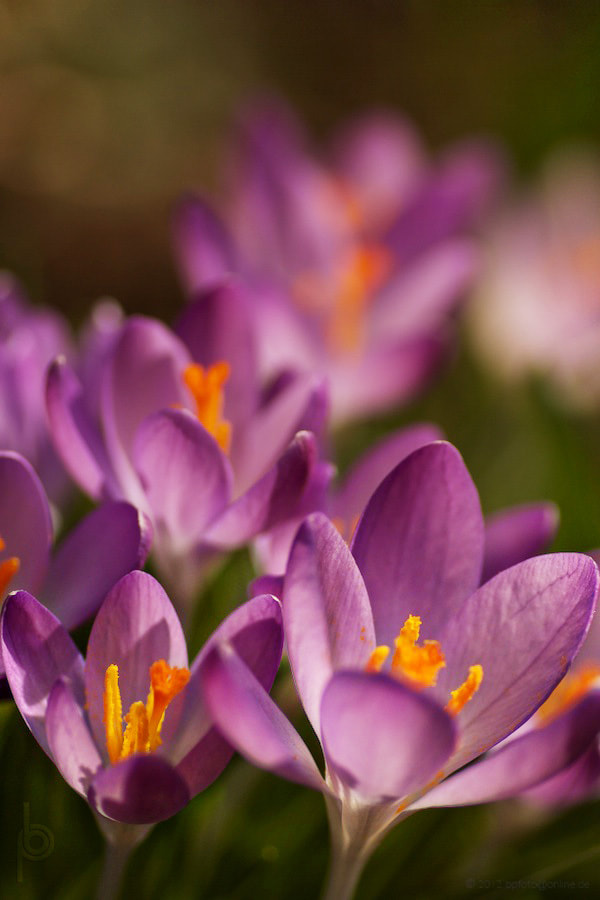 Photograph Waiting for spring by Benno Pütz on 500px