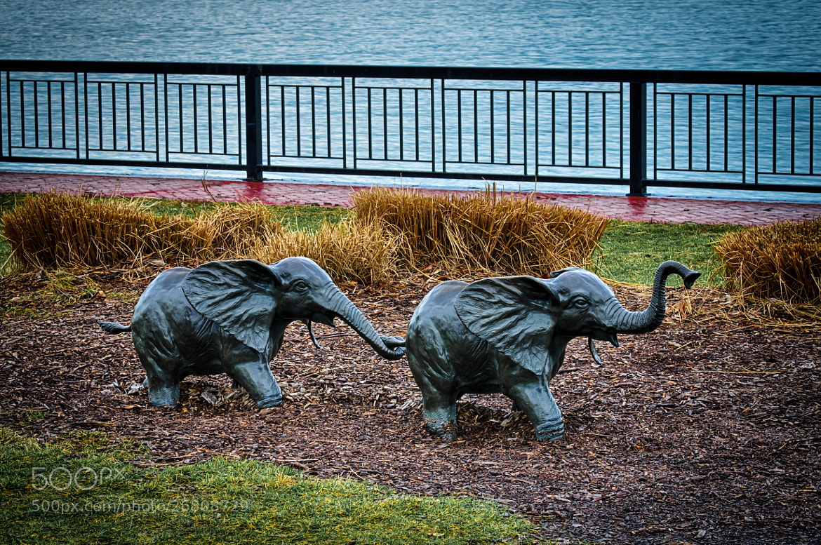 Photograph Little Elephants by Steven Wosina on 500px