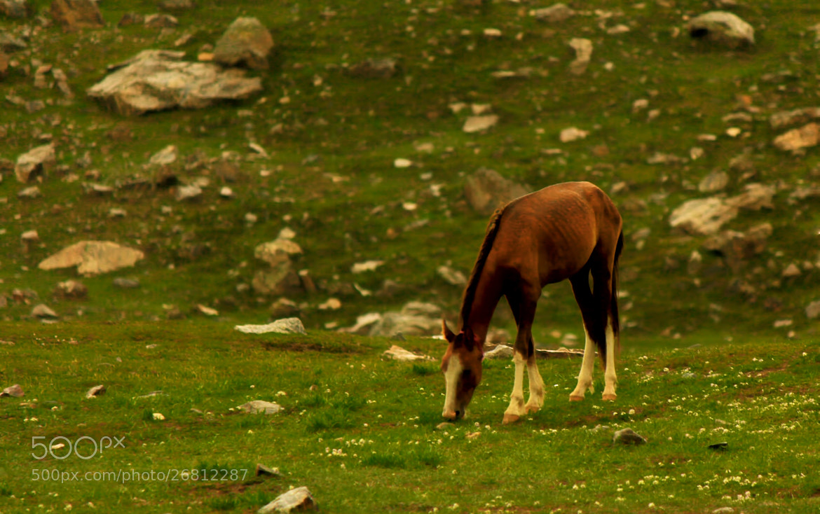 Photograph LUSH GREEN MEAL by hasnain raza on 500px