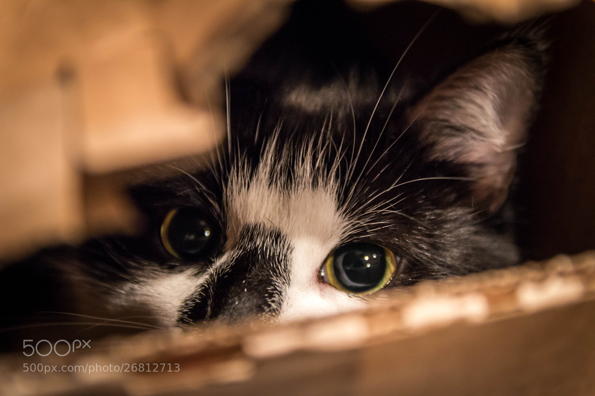 Photograph Cat in a box by Håvard Hovind on 500px
