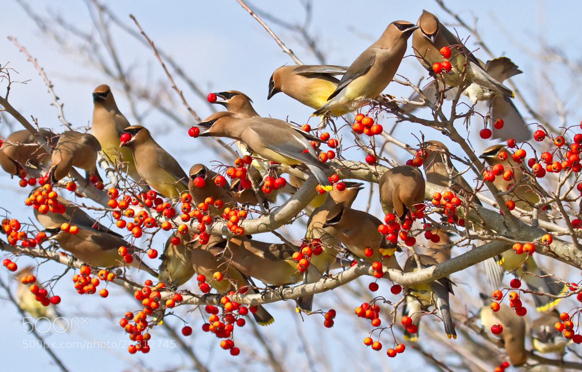Photograph Bird Party!!! by Lorraine Hudgins on 500px