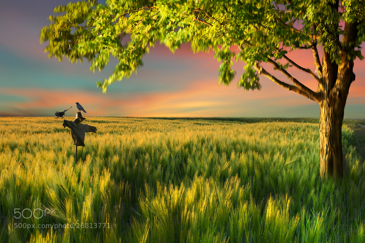 Photograph sunny place  by Kittiwut Chuamrassamee on 500px