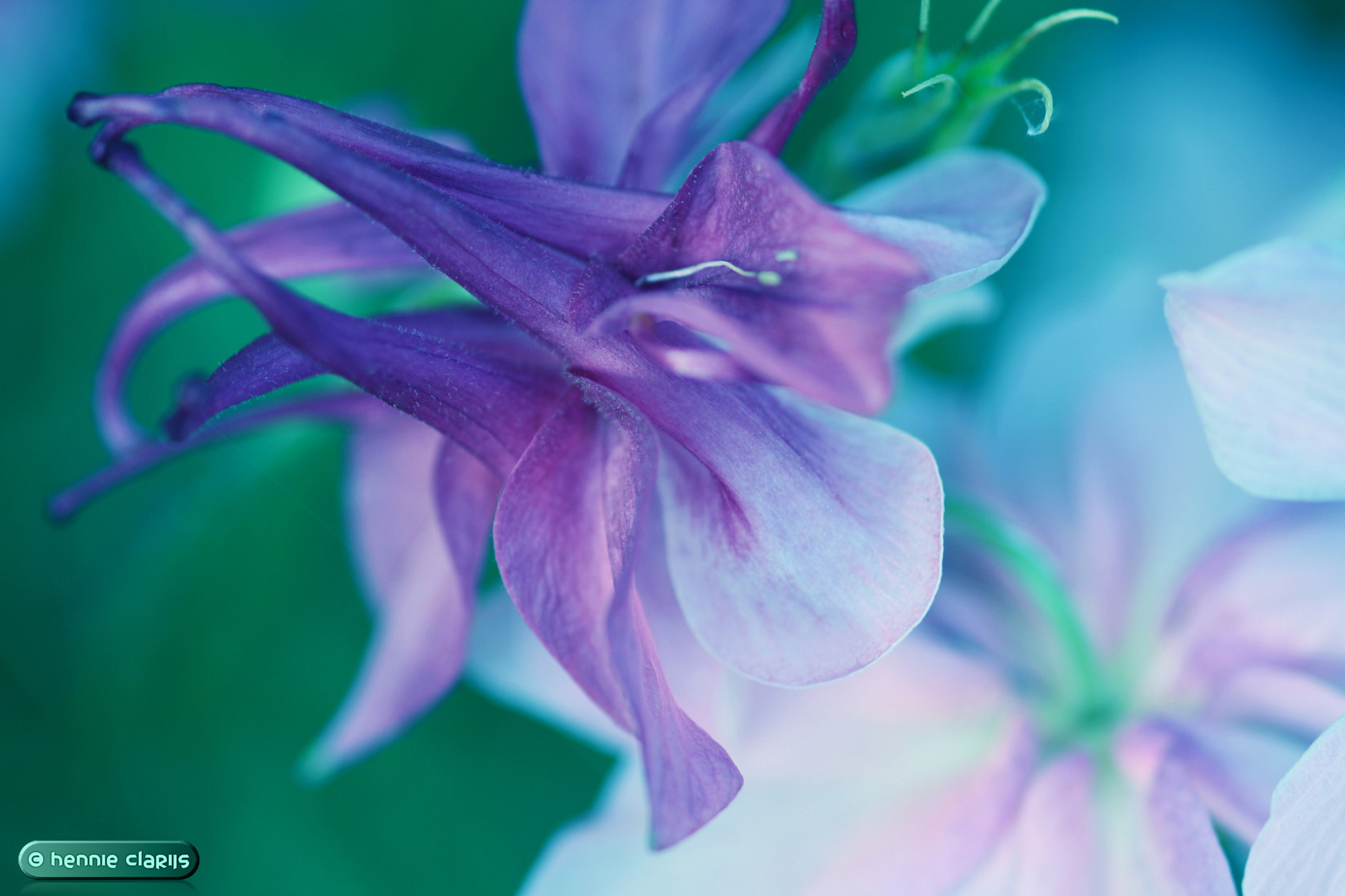 Photograph Call me Violet by Hennie Clarijs on 500px
